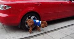 汽车保养小知识 教你怎么阻挡狗尿袭胎